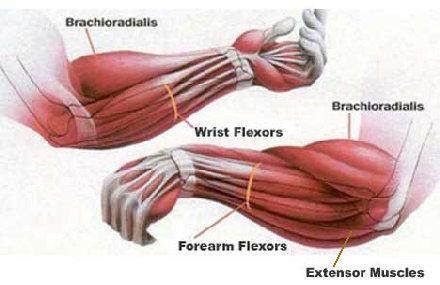 Fat Forearm Training